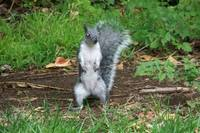 funny little squirrel