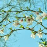 """""""blossom bow"""" by carol29hynes"""