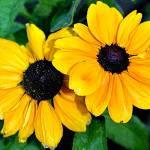 """Daisy"" by CD_Tubbs"