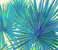 abstract blue palms