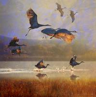 sunrise on the marsh2 - sandhill cranes