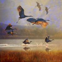 """sunrise on the marsh2 - sandhill cranes"" by rchristophervest"