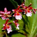 """Orchids"" by keenart"
