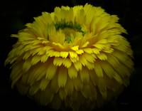 *Yellow Flower