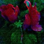 """Flowering Moss"" by dasiygirl"