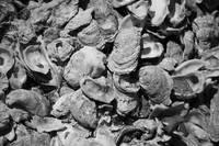 Oyster Shells bw