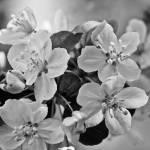 """Tender Spring Moments"" by julieandel"