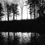 """Twilight Woods"" by patenaudephotography"
