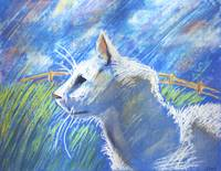 White cat in the field