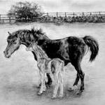 """Mare and Foal"" by slnixon"