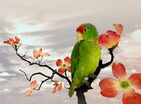 Parrot in Dogwood Tree