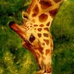 """Giraffe"" by slnixon"
