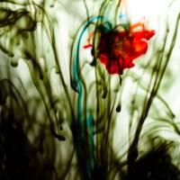 Flower Art Prints & Posters by Alex Sincalir