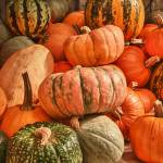 """Decorative Pumpkins"" by SederquistPhotography"