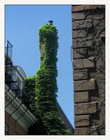 Urban City Boston Ivy Chimney