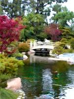 Japanese Garden with Bridge and Koi Pond