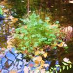 """Montreal Pond 1"" by StevenHorst"