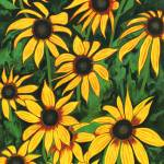 """Black-eyed Susans"" by StrandStudio"