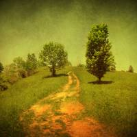 The road less traveled Art Prints & Posters by David Cummings