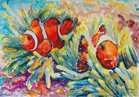 Clowfish In Their Paradise