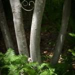 """Happy Forest"" by gordophoto"