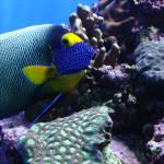 """""""Colorful Fish of the Sea"""" by jay1blue"""