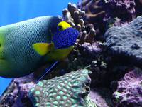 Colorful Fish of the Sea
