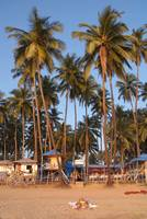 Palm Lined Beach Palolem