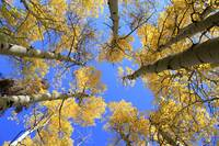 Aspens Skyward
