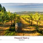 """Vineyard Dawn 3"" by RichardDuval"