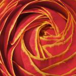 """Sherbert Flower"" by LeahTrottArt"