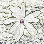 """""""Flower 1"""" by KjWorthing"""