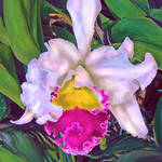 """TROPICAL ORCHID"" by pietrastone"