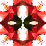 """Hibiscus Montage 1 By Bill McAllen"" by McallenPhotography"