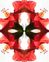 Hibiscus Montage 1 By Bill McAllen