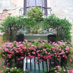 """Balcony with Pink Geraniums"" by DonnaCorless"