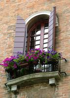 Brick Wall Purple Petunias