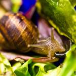 """Hungry Snail"" by YphotographY"