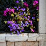 """Petunias Through Wrought Iron Window"" by DonnaCorless"