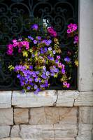 Petunias Through Wrought Iron Window