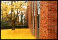 Morrow in the fall