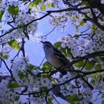 """BIrd in Tree - Textured"" by micspics444"