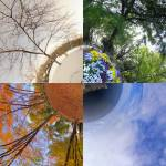 """Four Seasons in Japan"" by vitroid"