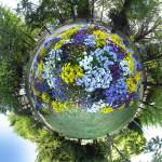 """Pansy Planet"" by vitroid"