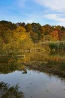 Shallow Pond In The Fall