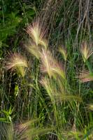Whispy Wild Grass