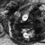 """Lex In Fur and Black"" by hdurham0490"