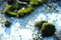 Moss on a railway ground