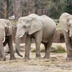 """Elephant Trio"" by StonePhotos"