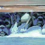 Boxers Waiting for Their Invitation by RD Riccoboni